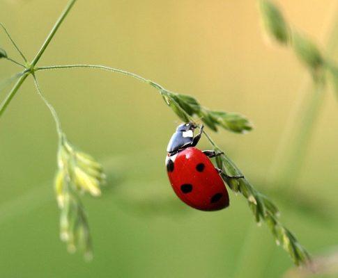 Die Tierwelt im Garten